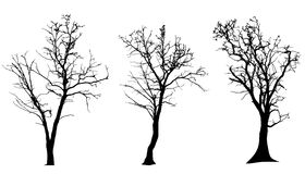 Vector silhouette of tree. Royalty Free Stock Photo