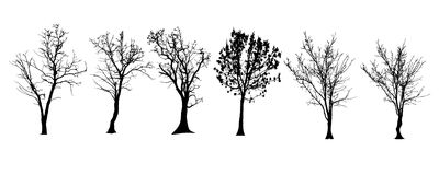 Vector silhouette of tree. Vector silhouette of tree on a white background Stock Image