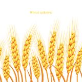 Vector silhouette of wheat. Wheat in the field on a white background.  Stock Images