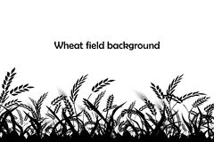 Vector silhouette of wheat. Silhouette. Wheat in the field. royalty free stock images
