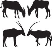 Vector silhouettes of animals Royalty Free Stock Photography