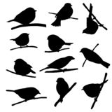 Birds at tree branch. Vector silhouettes of bird sitting at tree branch, tits and sparrows, hand drawn songbirds, isolated nature design elements stock illustration