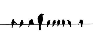 Vector silhouettes of the birds Royalty Free Stock Image