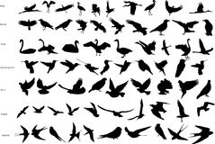 Vector silhouettes of birds. Vector silhouettes of storks, crows, doves, hummingbirds, swallows, swans and seagulls Royalty Free Stock Images