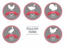 Vector silhouettes of chicken, rooster, goose, turkey, duck. label templates with farm birds Stock Image