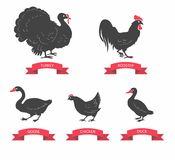 Vector silhouettes of chicken, rooster, goose, turkey, duck Stock Photos