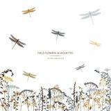 Set of field flowers, herb and dragonflies. Card design. Label design vector illustration