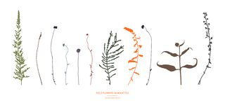 Set of field flowers, herbs. Set of design elements. Autumn colors. royalty free illustration