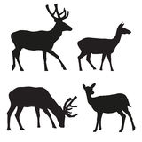 Vector silhouettes of deer Stock Photos