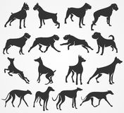 Vector silhouettes of dogs stock photos