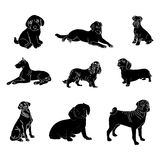 Vector silhouettes of dogs of different breeds. Vector dog breed silhouettes collection. Black dog icons collection isolated stock illustration