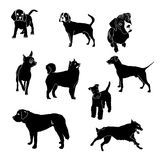 Vector silhouettes of dogs of different breeds. Vector dog breed silhouettes collection. Black dog icons collection isolated Stock Image