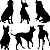 Vector silhouettes of dogs in various poses. Set of silhouettes of dogs pinscher, ridgeback hound, pointer, Newfoundland, Dalmatians breed in various poses Stock Images