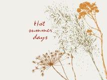 Silhouettes of summer herbarium stock illustration