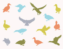 Vector silhouettes of ducks. Vector silhouettes of ducks and ducklings standing, walking, swimming, diving and flying. Vector illustrations isolated on white Royalty Free Stock Images