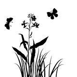 Vector silhouettes of flower and grass with butterflies Royalty Free Stock Photo