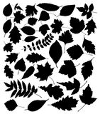 vector silhouettes of leaves Royalty Free Stock Photos