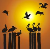 Vector silhouettes pelicans and sunset. Pelicans of the pillars of the old pier, vector illustration Stock Photo