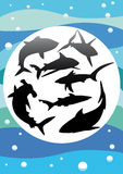 Vector silhouettes of sharks Stock Photos