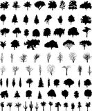 Vector trees. Vector silhouettes of the trees Stock Images