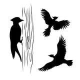 Vector silhouettes of a woodpecker Stock Photos