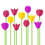 Vector simple design tulips Royalty Free Stock Photo