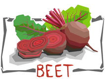 Vector simple illustration of beets. Stock Photos