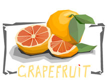 Vector simple illustration of grapefruit. Royalty Free Stock Photography