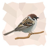 Vector simple illustration of sparrow bird. Stock Image