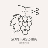 Vector Simple Logo Template Wine Harvesting Stock Images