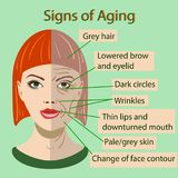 Vector sing of aging face with two types of skin, young and old Royalty Free Stock Photos