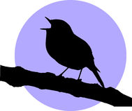 Vector singing robin redbreast Royalty Free Stock Images