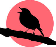 Vector singing robin redbreast. Color Royalty Free Stock Photos