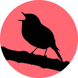 Vector singing robin redbreast Royalty Free Stock Photography