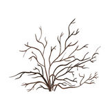 Vector Single Bare Brown Bush Stock Images