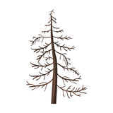 Vector Single Cartoon Brown Bare Pine Tree Stock Photos