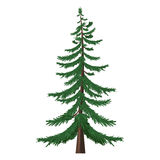 Vector Single Cartoon Pine Tree on White Background Royalty Free Stock Images