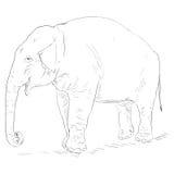 Vector Single Sketch Elephant Royalty Free Stock Image