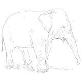 Vector Single Sketch Elephant royalty free illustration