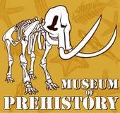 Vector skeleton of mammoth on paleontology background museum of prehistory. Illustration Royalty Free Stock Photo