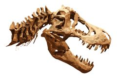 Vector skeleton of Tyrannosaurus rex  T-rex  on isolated background . Skull and Neck Royalty Free Stock Photo