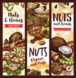 Vector sketch banner of nuts and fruit beans seeds. Nuts, beans and fruit seeds mix sketch banners. Vector design of peanut or pistachio and almond, coconut nut Royalty Free Stock Images