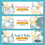 Vector Sketch Banners Of Tropical Exotic Fruits Royalty Free Stock Photo