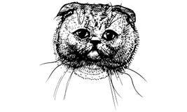Vector sketch beautiful cat muzzle Royalty Free Stock Photos