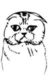 Vector sketch beautiful cat muzzle Stock Photos