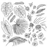 Vector sketch black and white set of elements. The leaves of tropical plants and exotic flowers buds. Graphic outline dra stock illustration