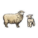 Vector sketch cartoon style sheep and lamb set. Isolated illustration on a white background. Hand drawn animal without horns. Cattle, farm cloven-hoofed Royalty Free Stock Images