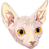 Vector Sketch the cat breed Sphynx Stock Image