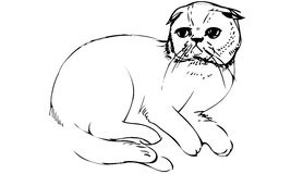 Vector sketch of a cat sittingk Royalty Free Stock Images