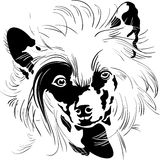 Vector sketch Chinese Crested dog hand drawing vector Stock Photo